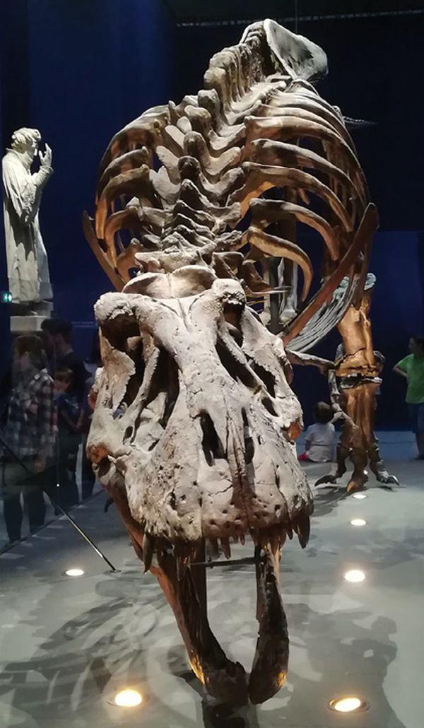 Datant de la clé de réponse fossile record