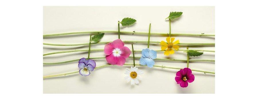 Et si les plantes n'étaient pas aussi sourdes que leurs pots ?